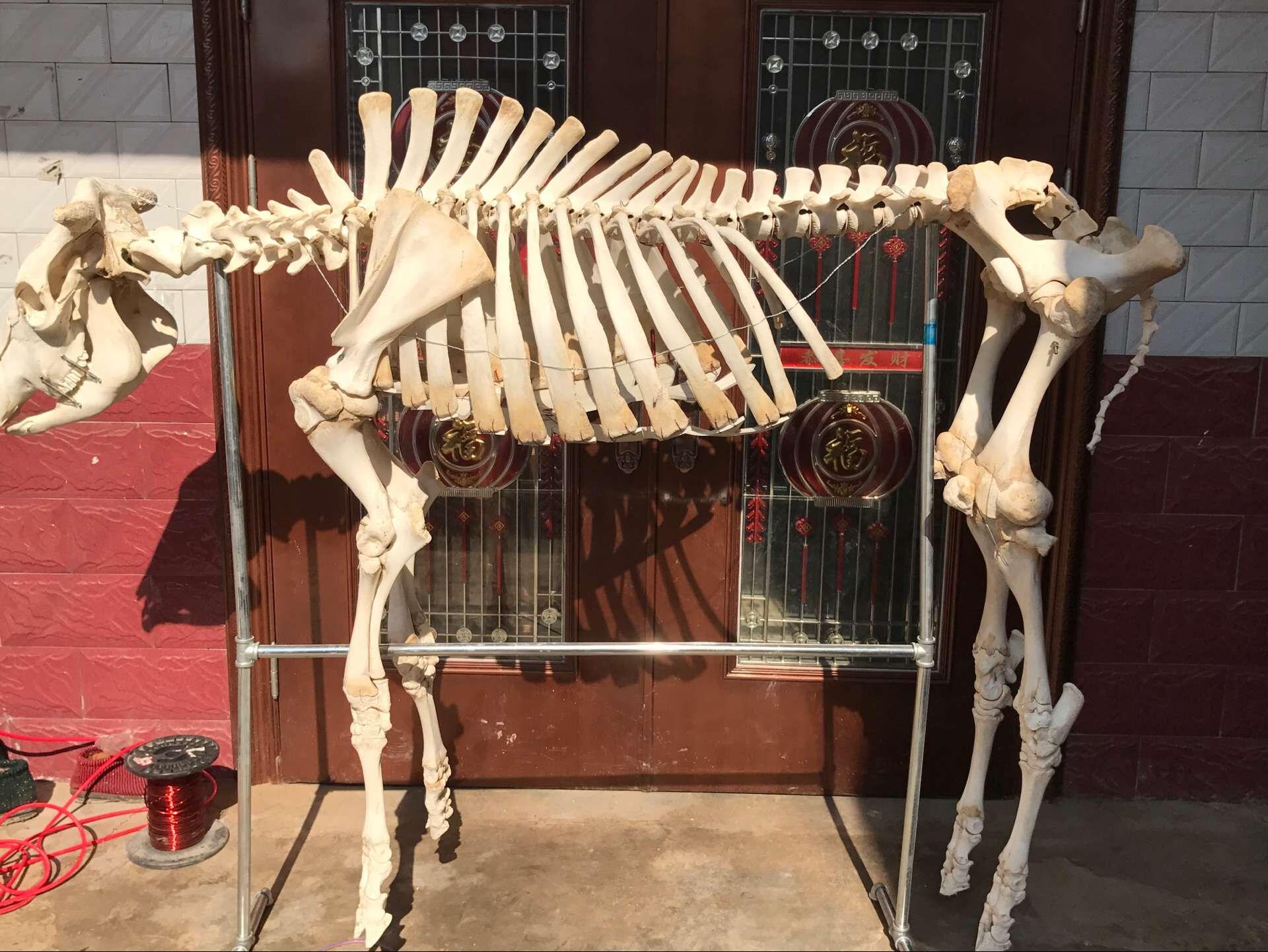 猫的骨骼结构图高清